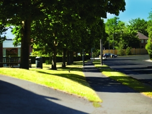 Tree-lined road local to Braeburn Mews, Bawtry